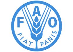 41-FAO.png